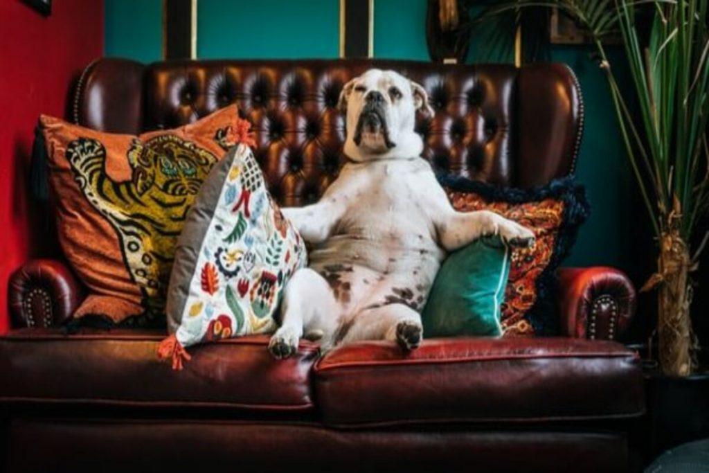 как да изчистим диван